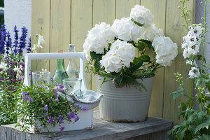 Arrangement mit weißer Hortensie, Rittersporn und Flaschenträger mit blauem Gänseblümchen