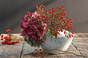 Hortensienblüte und Hagebutten