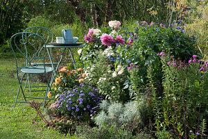 Herbstbeet mit Chrysantheme 'White Bouquet', Aster 'Sapphire', Dahlien und Ziersalbei Rockin