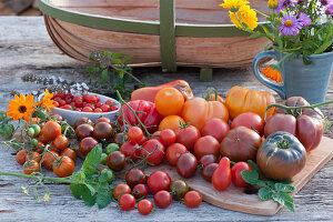 Tomatenvielfalt: Kirschtomaten, Cocktailtomaten, Fleischtomaten und runde Tomaten