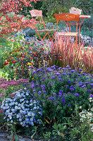 Beet mit Herbstastern 'Aqua Compact' 'Azurit', Fetthenne 'Herbstfreude', Peperoni 'Lila Luzi' und Glockenchili 'Bishop's Crown', Japanisches Rotgras 'Red Baron'