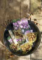 Krokuszwiebeln zum Einpflanzen und Gartenkralle in Schale