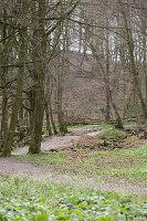 Laubwald im Frühling