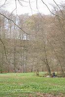 Frühlingserwachen auf der Waldwiese mit Buschwindröschen und Scharbockskraut