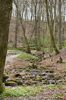 Frühlingserwachen im Laubwald