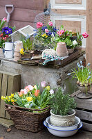 Frühlings-Arrangement mit Tulpen, Narzissen, Traubenhyazinthen und Rosmarin