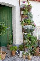 Vertikale Bepflanzung mit Korbkästen an Leiter