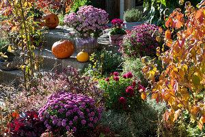 Herbstbeet mit Chrysantheme, Purpurglöckchen, Strauchveronika Magicolors 'Heartbreaker', Schneeball und Heiligenkraut