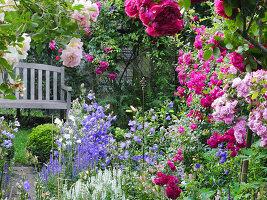 Romantisches Beet vor Holzbank mit Rosen ('Ghislaine de Féligonde', 'Laguna', 'Super Excelsa', 'Super Fairy') und Glockenblumen