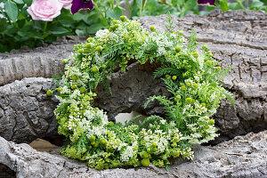 Kranz aus Ligusterblüten, strahlenloser Kamille und Blättern der Schafgarbe