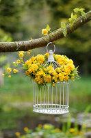 Blütenkranz aus gefüllter Kerrie an Vogelkäfig