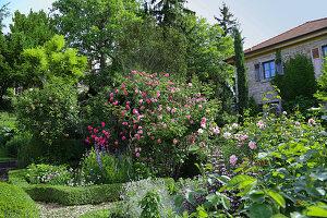 Mediterraner Garten mit blühenden Rosen
