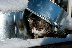 Katze schaut unter Zinkschale hervor