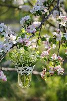 Maiglöckchenstrauß in Hängevase an blühenden Apfelbaum gehängt