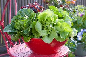 Verschiedene Salate in roter Schale