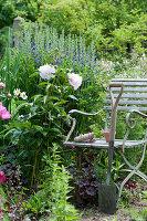 Stuhl am Frühsommer-Beet mit Pfingstrose und Indigolupine