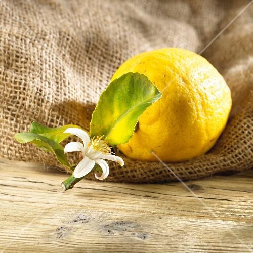 A lemon with a leaf and flower on a hessian sack