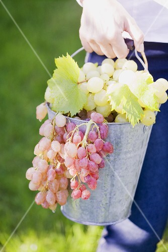 A woman holding a bucket of fresh grapes