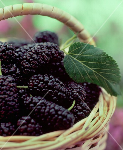 A basket of fresh mulberries