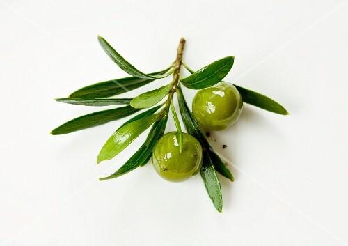 A sprig of green olives