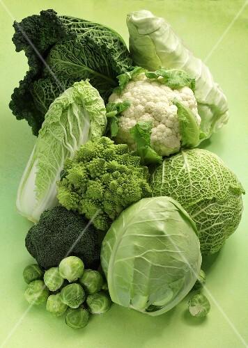 Different varieties of cabbage