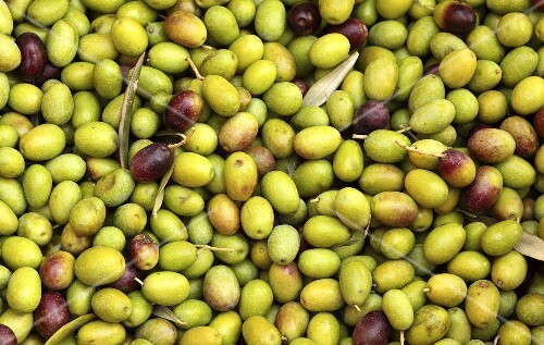 Olives (macro zoom), Perugia, Umbria, Italy