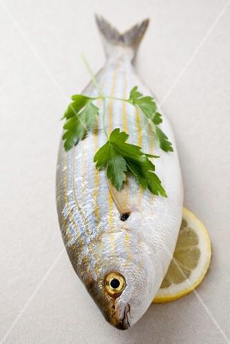 Fresh sarpa salpa with parsley and lemon