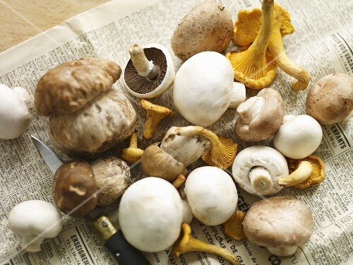 Porcini mushrooms, chanterelle mushrooms and button mushrooms with a knife on a piece of newspaper