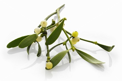 Sprig of mistletoe
