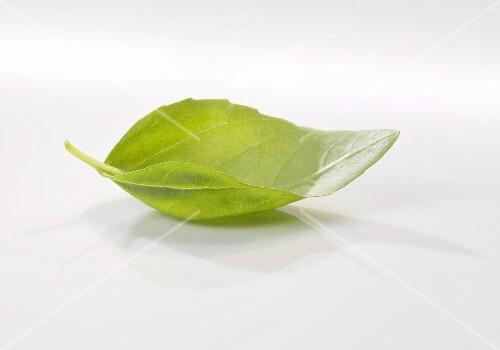 A basil leaf