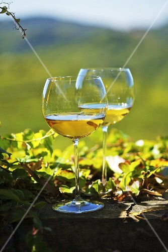 Two glasses of white wine against the Friaul landscape of Italy