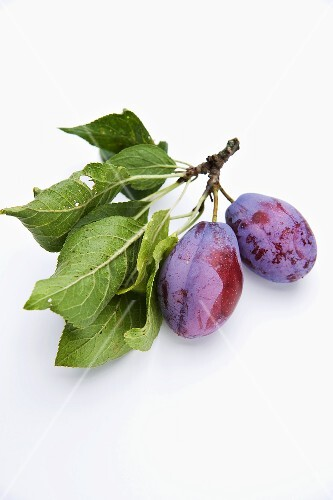 Plums with twigs and leaves