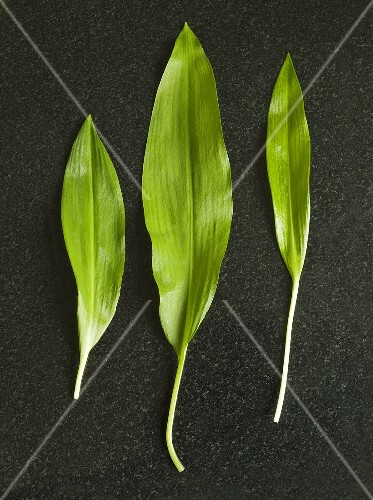 Three fresh ramsons (wild garlic) leaves
