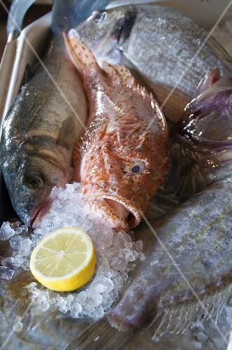 Fresh fish on ice with half a lemon