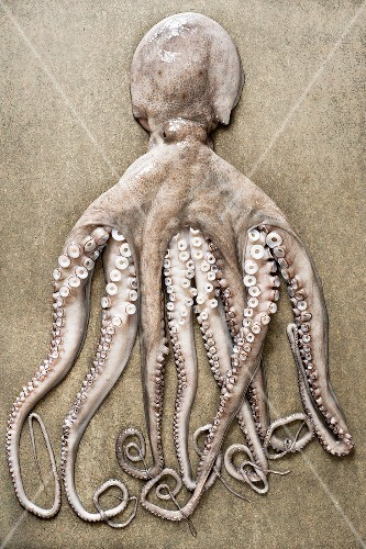 An entire octopus