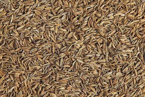 Fennels seeds (macro-zoom)