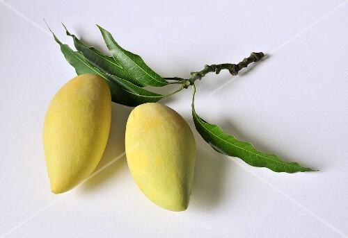 Nam Dok Mai mangos form Thailand