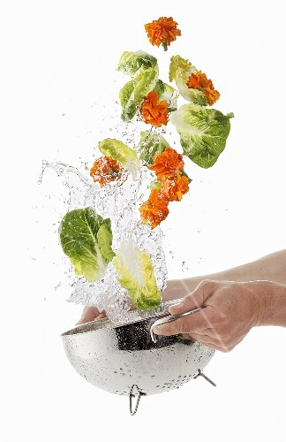 Lettuce and marigolds being washed