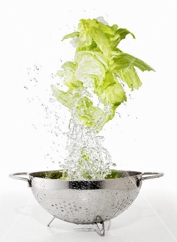 Iceberg lettuce being washed in a colander