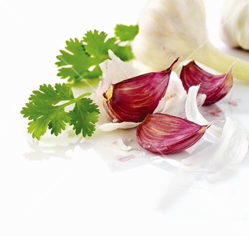 Garlic with cilantro