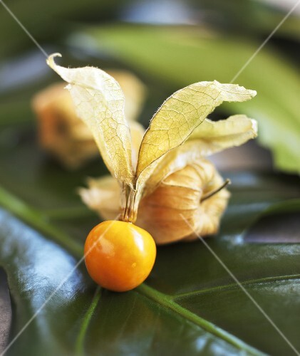 Cape gooseberry on a leaf (close up)
