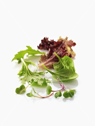 Radish sprouts and salad leaves