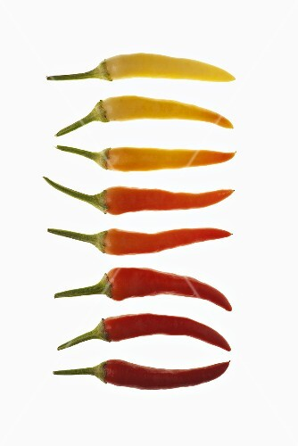 A row of chilli peppers (ripe and unripe)