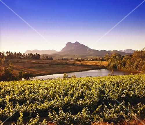 Wine-growing region around Paarl against Simonsberg, S. Africa