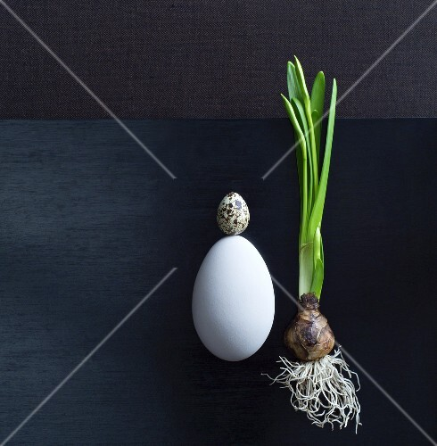 Narcissus bulb with hen's and quail's egg