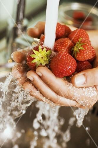 Hands holding strawberries under running water
