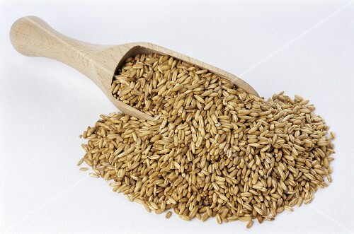 Oat grains on wooden scoop (Avena sativa)