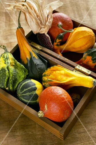Edible squashes and ornamental gourds in a wooden box