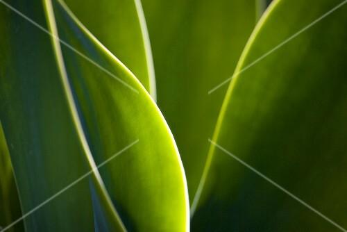 Green leaves (detail)
