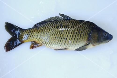 A carp